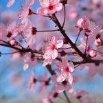 春(3月・4月・5月)のバス釣り教えます!オススメルアー・ワーム・春バス攻略法を紹介します!